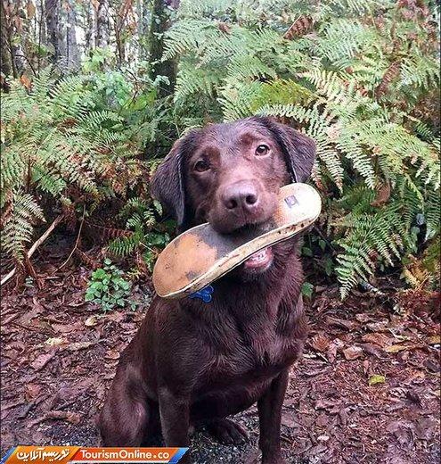 سگ امداگر و جستجوگر نجات