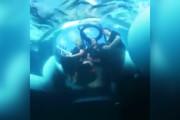 فیلم | اسنپ به مقصد کف اقیانوس