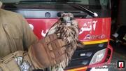 عکس | صید پرنده شکاری در تهرانسر