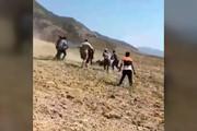 فیلمی از حمله خرس وحشی به اهالی روستایی در گلستان