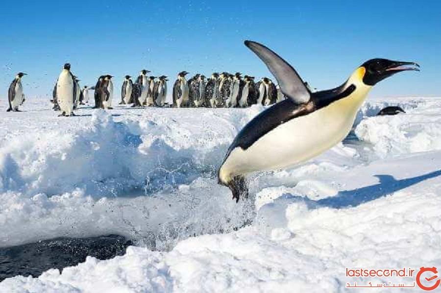 5201406 - دانستنی های جالبی درباره قاره قطب جنوب