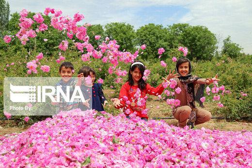 صادرات براعم ورد المحمدي من بردسير كرمان بلغت 2.5 مليون يورو
