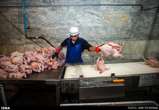 وزارت جهاد کشاورزی خواستار افزایش قیمت مرغ شد