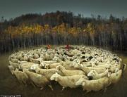 تصاویر   ۱۴ عکس برتر از ۱۷۵ هزار عکس ارسال شده به «CEWE»
