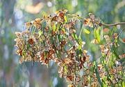 چرا تعداد پروانهها زیاد شد؟