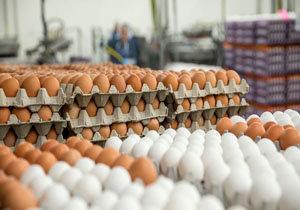 قیمت تخم مرغ در سراشیب ارزانی