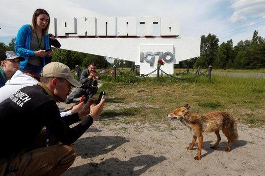 گردشگران در شهر متروکه پریپیات اوکراین که در نزدیکی نیروگاه هستهای چرنوبیل واقع شده، از یک روباه عکس میگیرند