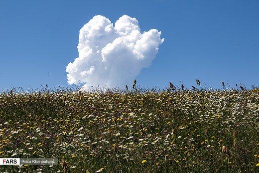 دشت گلهای بابونه اردبیل