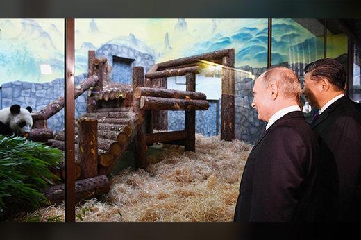 فیلم | پوتین و رئیس جمهور چین در باغ وحش مسکو