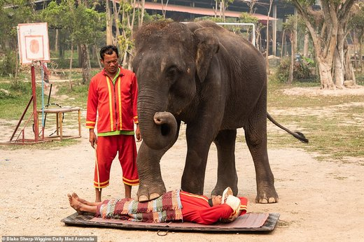 فیلهای تایلند