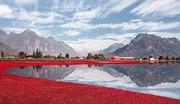 تصاویر | سواحل قرمزرنگ؛ عکسهایی باورنکردنی از زیباییهای زغال اخته!