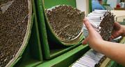اختصاص ۱۶ میلیون دلار ارز ۴.۲۰۰ تومانی به کاغذ سیگار