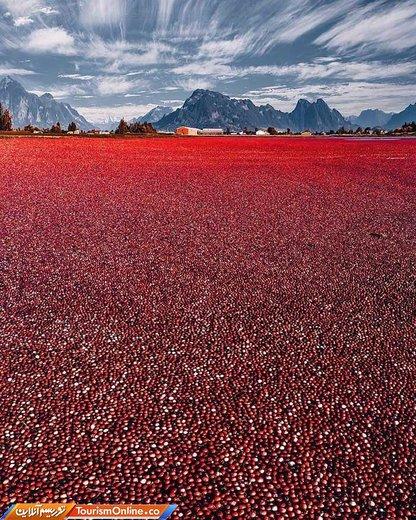 سواحل قرمز رنگ در کانادا