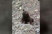 فیلم کامل از رفتار وحشیانه با یک توله خرس در سوادکوه (۱۴+)