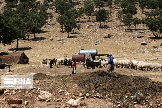 زندگی چادرنشیان در زاگرس غربی