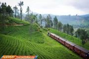 تصاویر | مزارع سبز و مه آلود چای سریلانکا