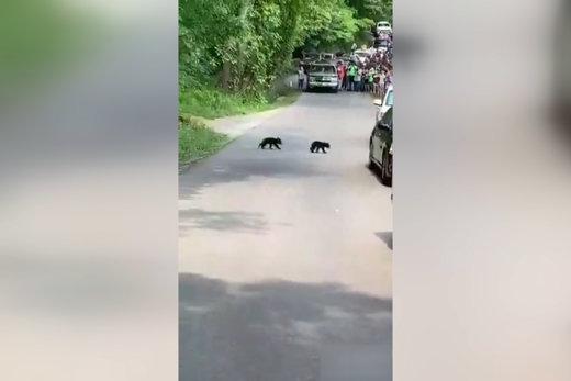 فیلم | برخورد فوق متمدنانه با یک خرس و تولههایش