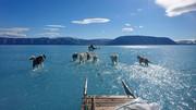 تصویری که زود وایرال شد؛ سگهای قطبی روی یخهای آب شده/ گرمایش جهانی با ما چه میکند؟