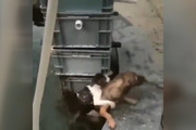 فیلم | فداکاری یک سگ برای نجات گربه