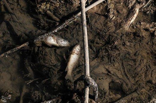 کاهش شدید آب رودخانه کرخه نور در هویزه