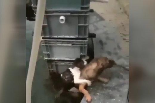 فیلم   فداکاری یک سگ برای نجات گربه