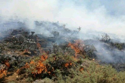 آتشسوزی ۱۲ ساعته در پناهگاه حیات وحش میانکاله