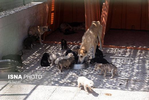 جزییات عقیمسازی سگهای پایتخت