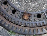 عکس | گیرکردن سنجاب در درپوش فاضلاب