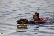 تصاویر | مانور سگهای هلالاحمر در دریاچه خلیج فارس