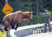 قوانینی که توله خرس سوادکوه را نجات میداد