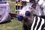 فیلم | رقابت زشتترین سگهای دنیا!