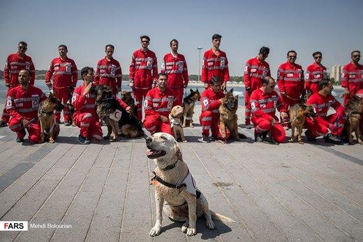 مانور سگهای جستجو و نجات هلالاحمر در دریاچه شهدای خلیج فارس