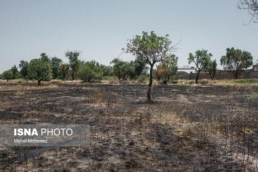 آتش در دل درختان باغستان هزار ساله قزوین