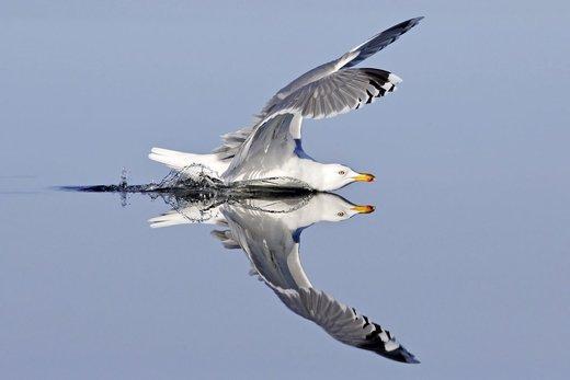 شیرجه دیدنی یک پرنده در آب