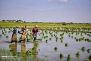 تصاویر | برکت بارانهای سیلآسا در گلستان