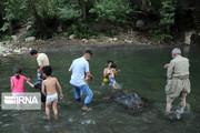 تصاویر | تفریح خانوادگی و آبتنی در آبشار شلماش