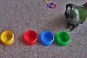 فیلم | پرنده باهوشی که رنگها را هم تشخیص میدهد!