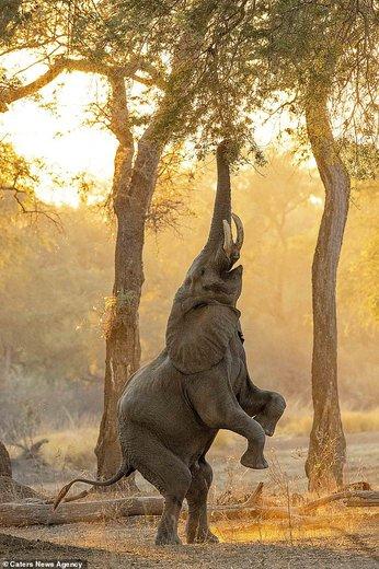 حیات وحش زیمبابوه