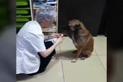 فیلم | سگ ولگرد برای درمان زخمهایش به داروخانه پناه برد!