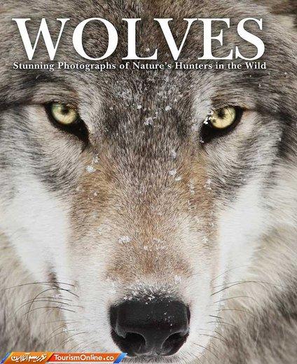 کتاب «گرگها» تام جکسون