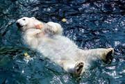 تصاویر | تفریح تابستانی حیوانات در باغوحش