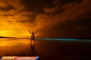 تصاویر | یک واقعه جادویی؛ شکار شبتاب دریایی!