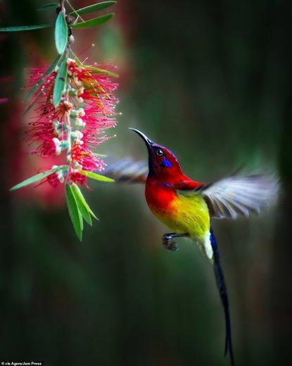 برنده امسال  مسابقه عکاسی آگورا بیوتی ۲۰۱۹ «ل وان وین» از ویتنام است که لحظه نزدیک شدن یک پرنده به گل را ثبت کرده و برنده یک هزار دلار شده است