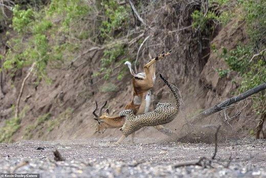 حیات وحش بوتسوانا