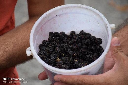 فروش تمشک و آلوچه جنگلی در حاشیه جاده حیران