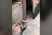 فیلم | لحظه شکار موش توسط گربه در کسری از ثانیه!
