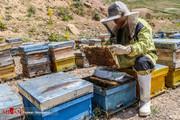 سالانه ۷۰۰تن عسل در مشگینشهر تولید میشود
