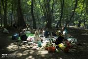تصاویر | پیکنیک در خنکای جنگلهای بکر گلستان