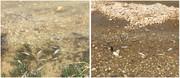 یک مزرعه پرورش ماهی متخلف در چهارمحال و بختیاری به دادگاه معرفی شد