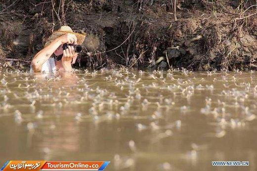 پدیده شکوفه تیسا در رودخانه تیسا مجارستان